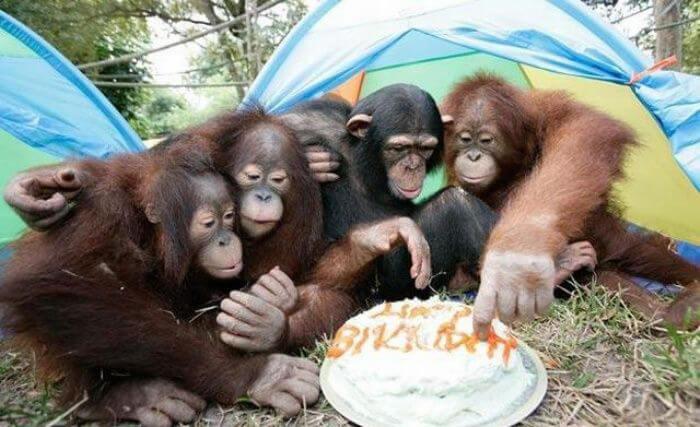 funny monkey images 46 (1)