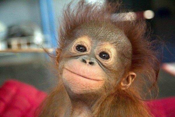 funny monkey images 47 (1)