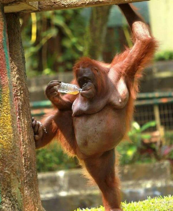funny monkey images 48 (1)