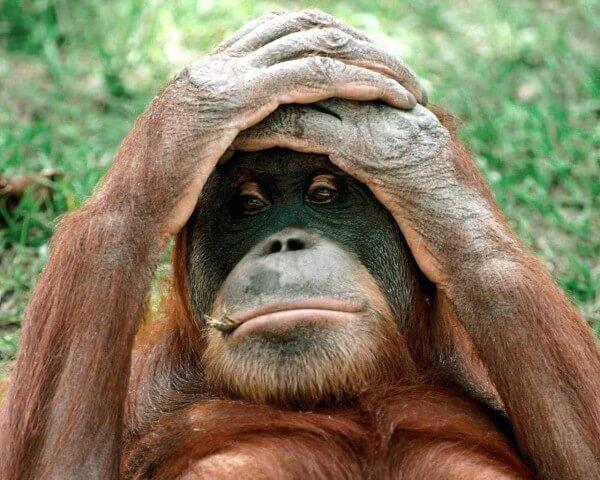 funny monkey images 49 (1)