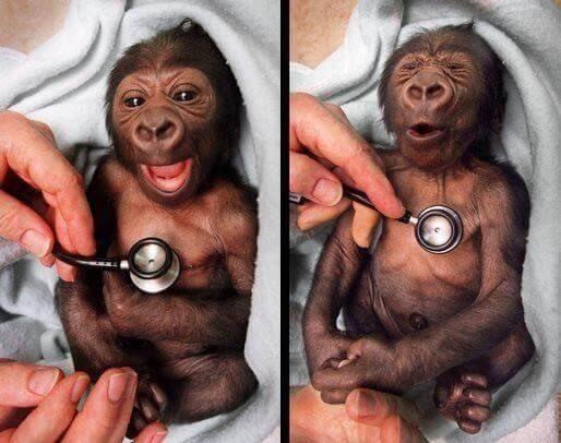 funny monkeys pics 5 (1)