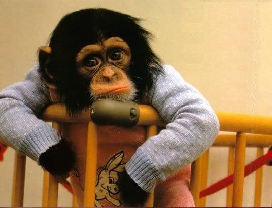 funny monkeys pics 6 (1)