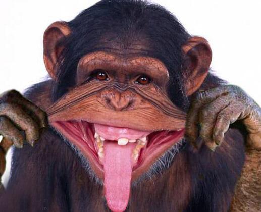 funny monkeys pics 7 (1)