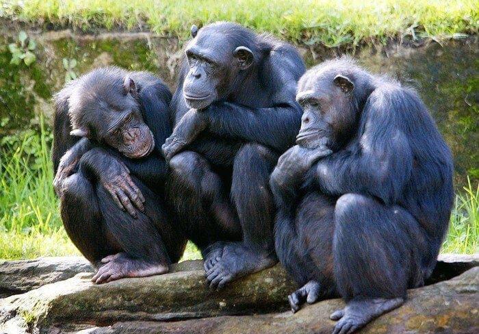 funny monkeys pics 9 (1)