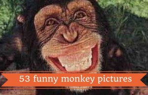 funny monkey pictures feat (1)