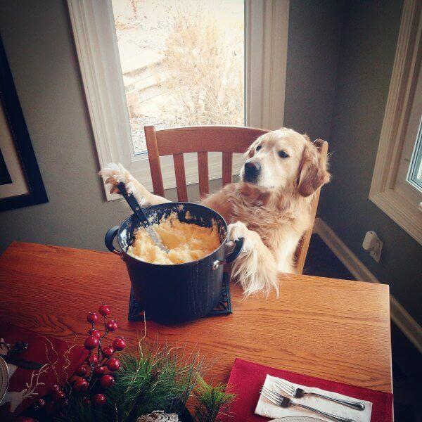 funny thanksgiving pics 30 (1)
