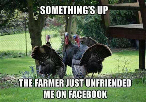 funniest thanksgiving pictures 7 (1)