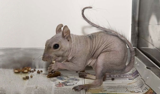 hairless animals you won't recognize 12 (1)