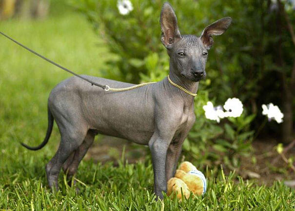 hairless animals you won't recognize 22 (1)
