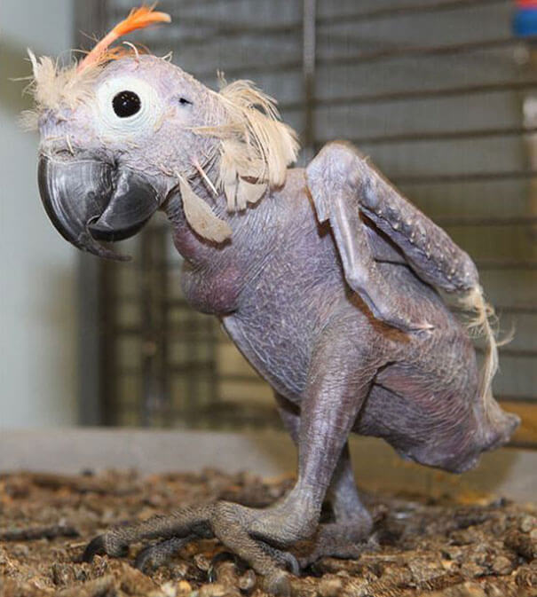 hairless animals are weird 7 (1)