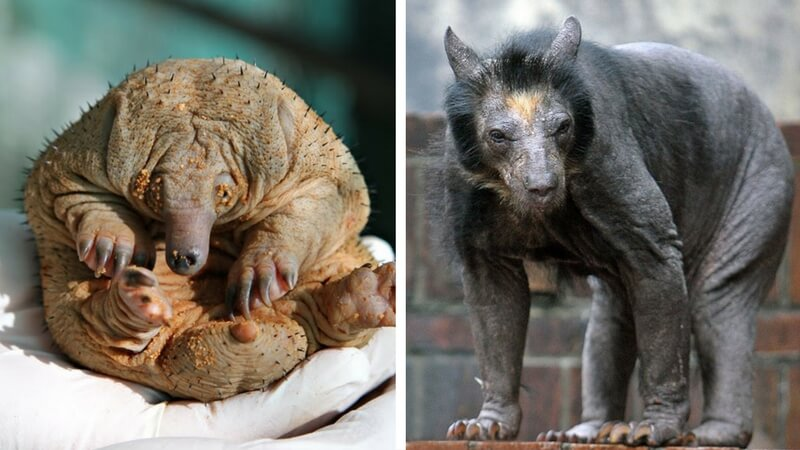 hairless animals you wont recognize feat (1)