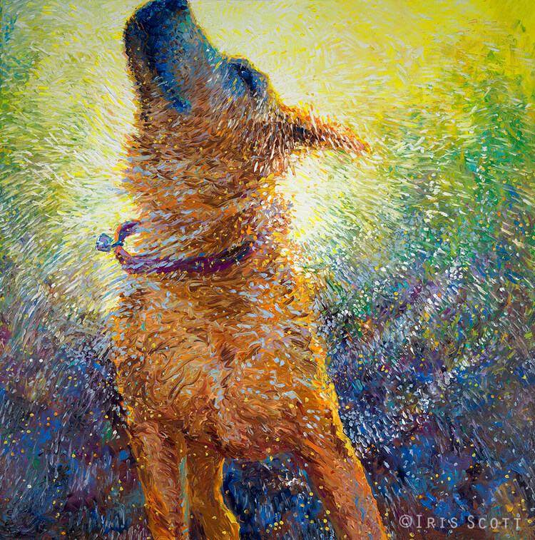 iris scott shaking dogs 7 (1)