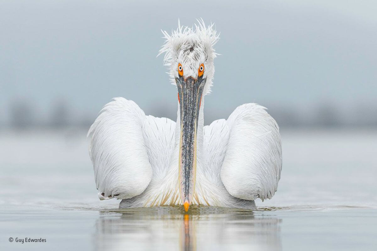 wildlife image choice awards 4 (1)
