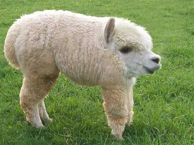 34 Animals Without Necks That Honestly Look Way Better