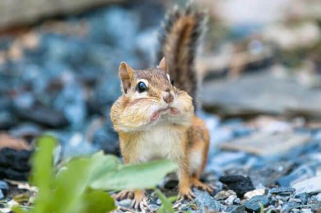 Surprised Animals 8 (1)