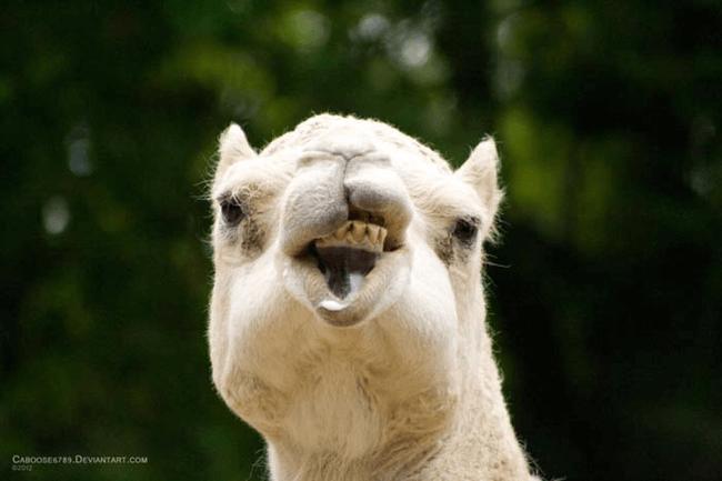 lol animals 15 (1)