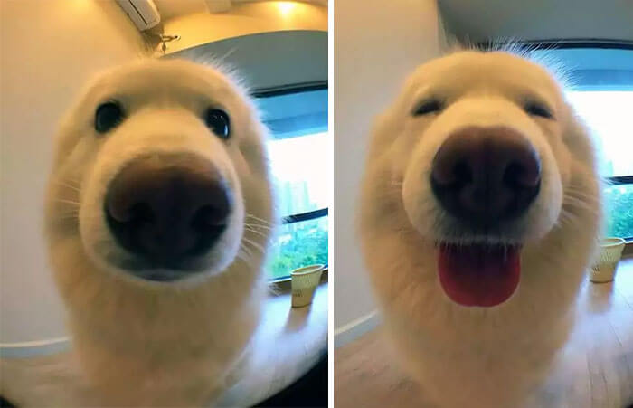 before after being called a good boy (1)