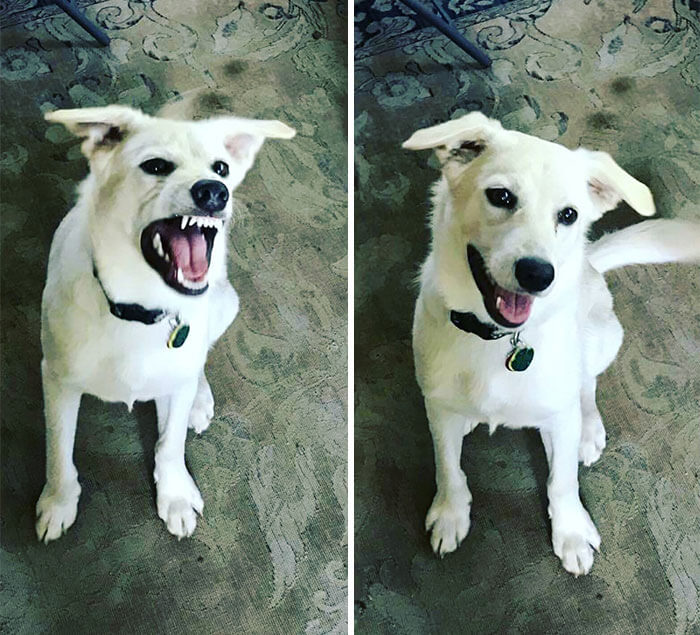 before after being called a good boy 6 (1)
