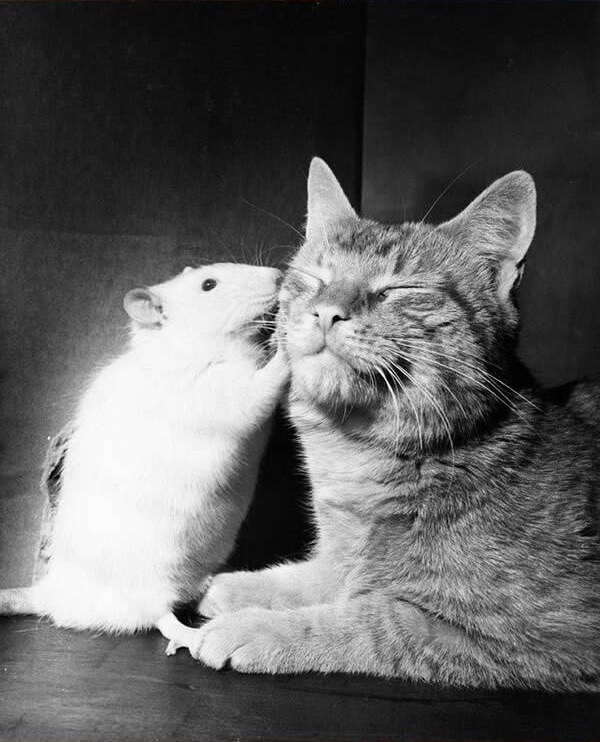 cat and mouse bff 12 (1)