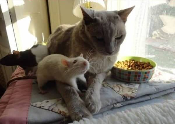 cat and mouse friends 18 (1)