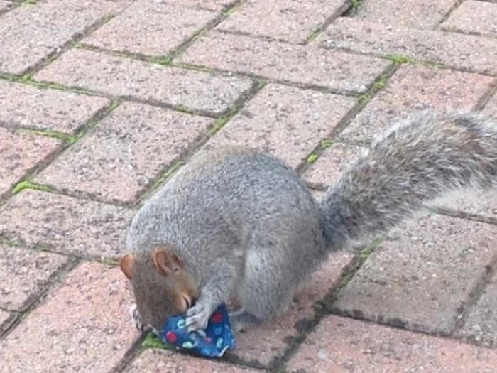 dad wraps christmas presents to squirrels (1)