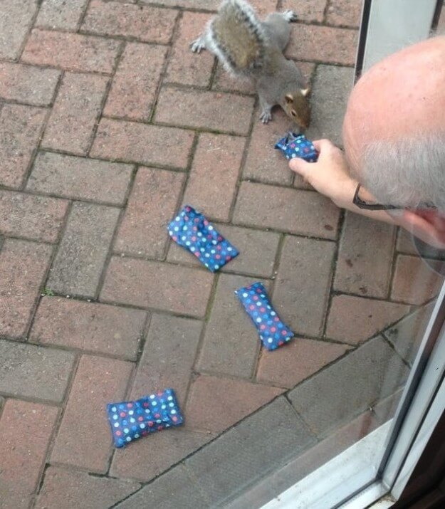dad wraps christmas presents to squirrels 2 (1)