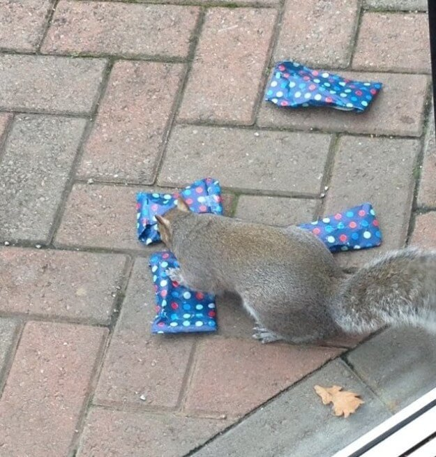 dad wraps christmas presents to squirrels 3 (1)