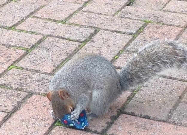dad wraps christmas presents to squirrels 4 (1)
