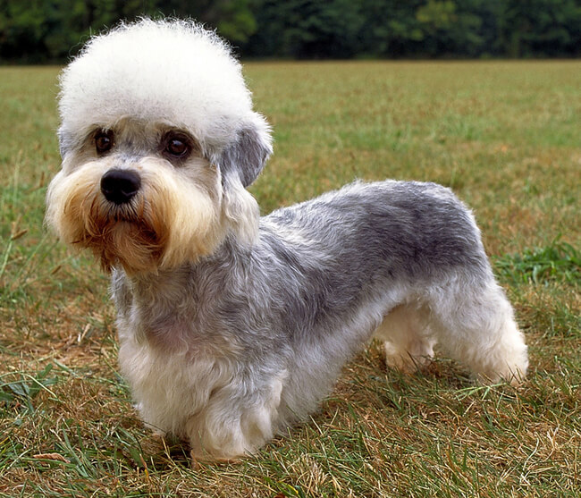 exotic dog breeds 3 (1)