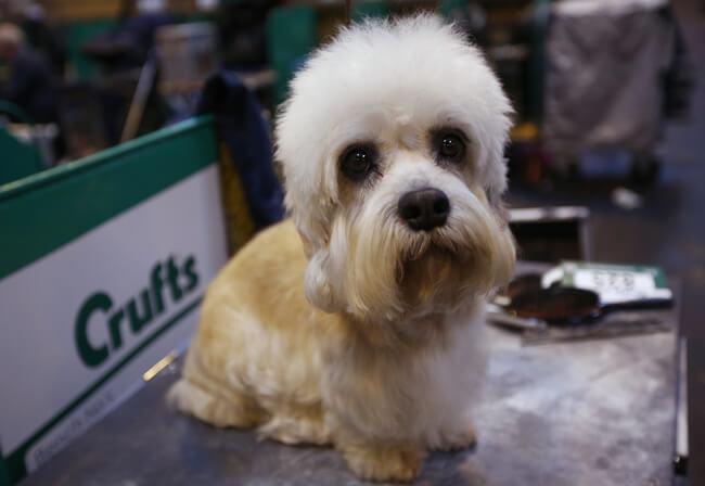 exotic dog breeds 4 (1)