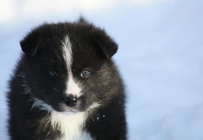 rare dog breeds 44 (1)
