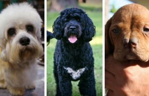 exotic dog breeds feat