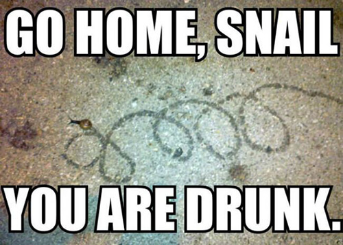go home you're drunk (1)