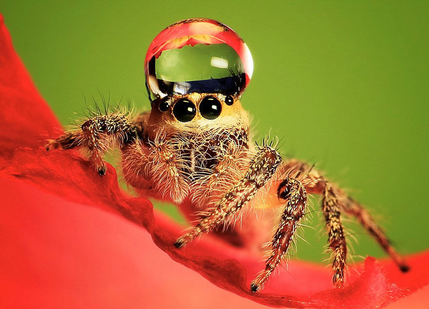 jumping spider water hat (1)
