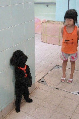 standing pets 14 (1)