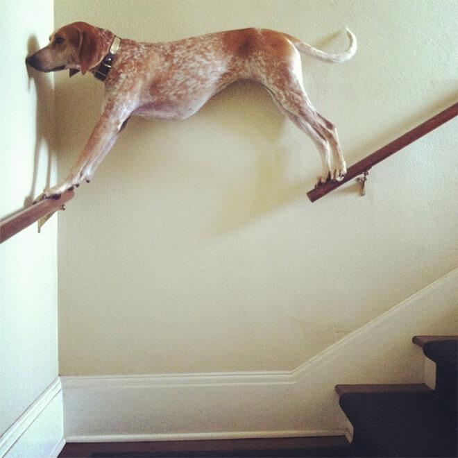 standing dog 17 (1)