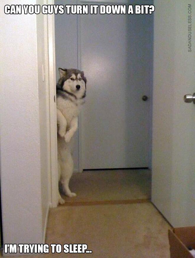 standing dog 2 (1)