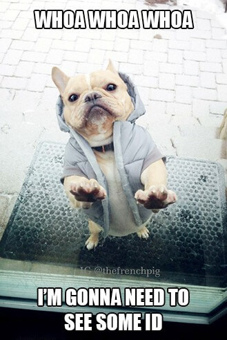 standing dog 4 (1)