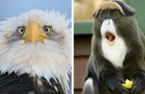 surprised animals feat (1)