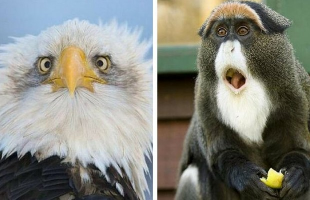 24 Surprised Animals Who Just Had A Little Heart Attack