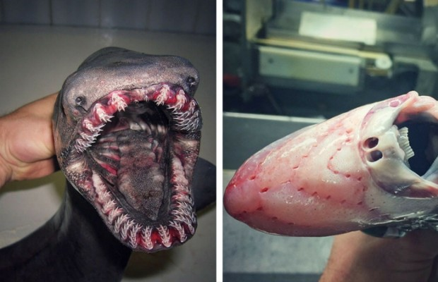 terrifying deep sea creatures feat