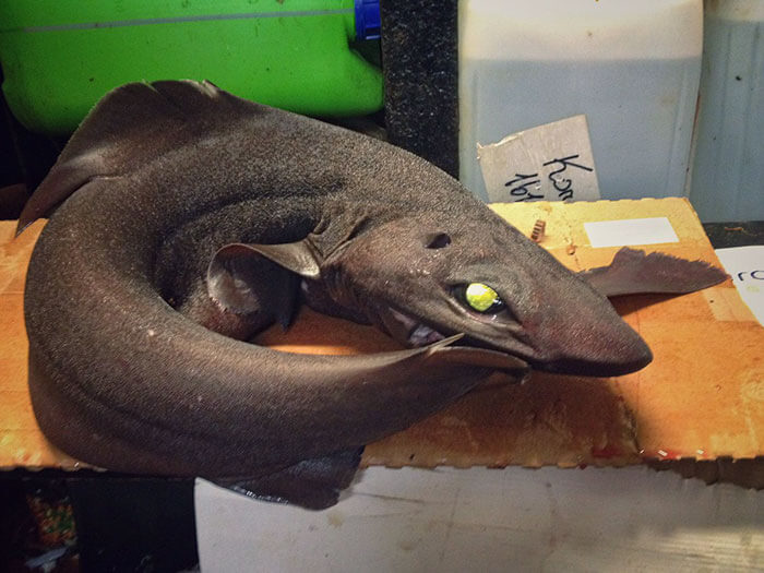 terrifying deep ocean creatures roman fedorstov 16 (1)