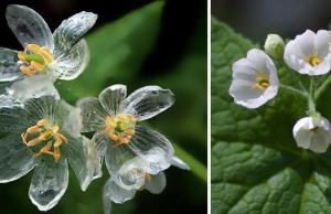 transparent flowers feat