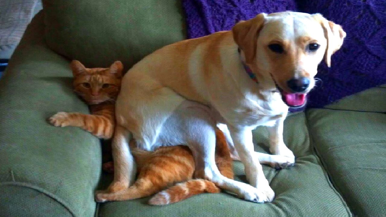 Why Do Dogs Sit On Cats? Didn\u0026#39;t You Always Want To Know