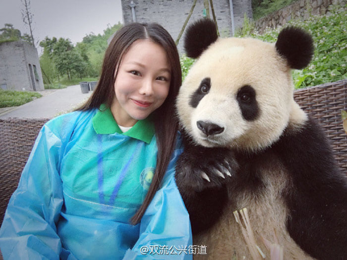 Giant Panda poses for selfies (1)