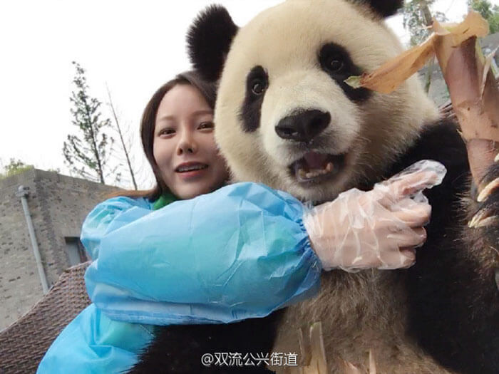 Giant Panda poses for selfies 3 (1)