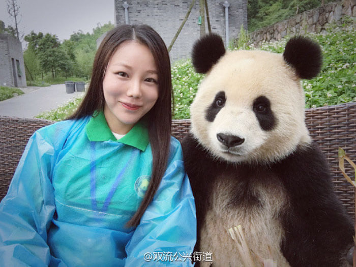 Giant Panda poses for selfies 4 (1)