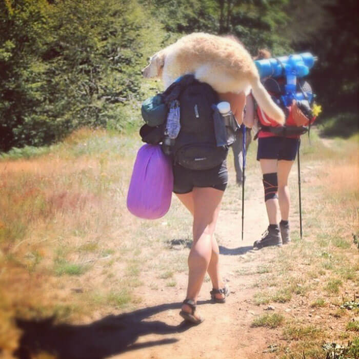 Marina Piro restors van travels with dog 15 (1)