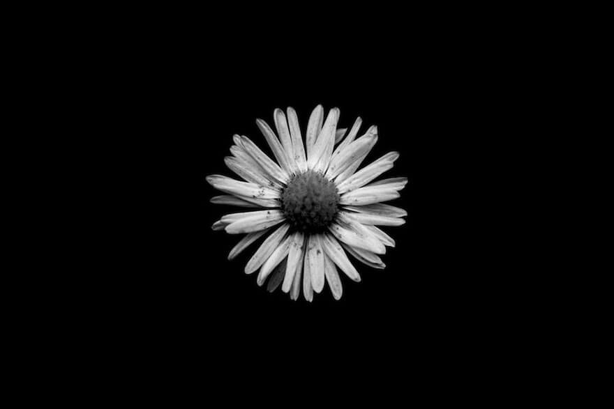 black and white nature photos 11 (1)