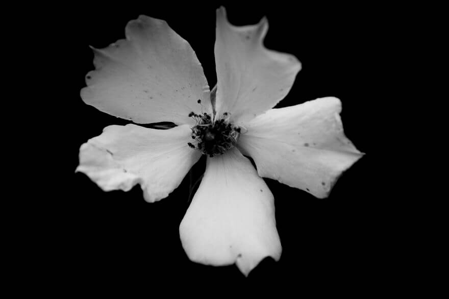 black and white nature photos 13 (1)